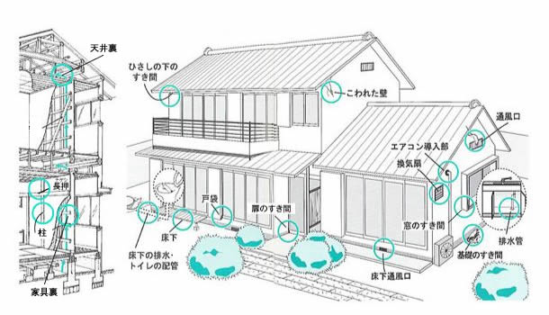http://www.pestcontrol-tokyo.jp/rat/img/nezumi_top.jpg